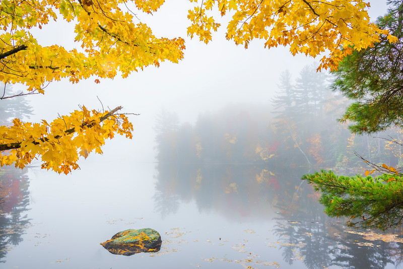 Framing A White Out In Mist - Vermont