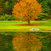 The Lone Orange Tree Reflected In The Pond - Vermont