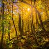 Sunburst Through Smugglers Notch Forest - Vermont