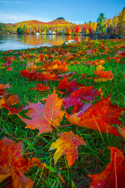From The Perspective Of Fallen Leaves - Vermont