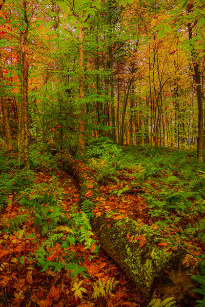 Getting Lost In The Forest - Vermont