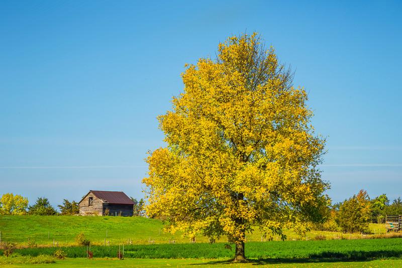 The Standing Proud Yellow Tree