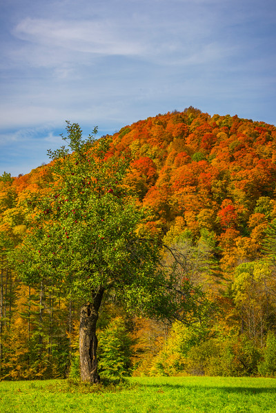 Complementary Autumn Elements - Vermont
