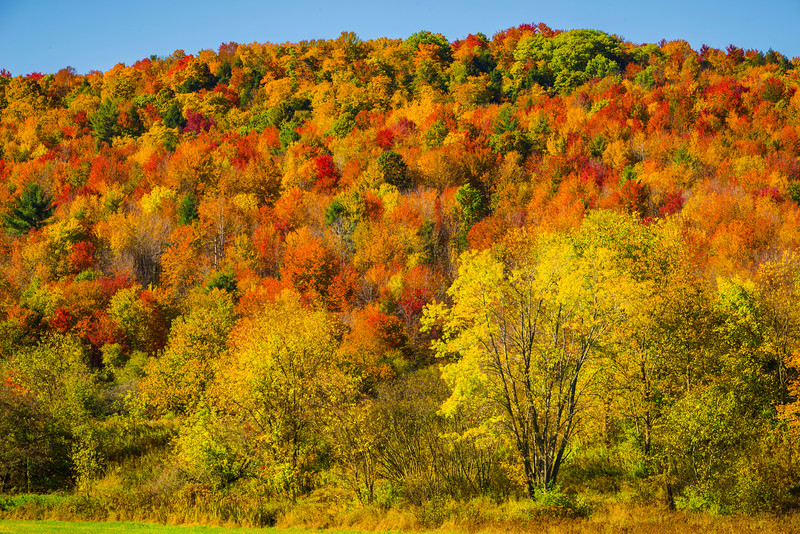 A Mesh Of Colors On The Hillsides