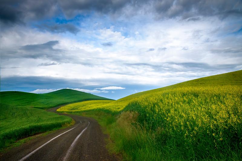 Curvy Roads Through The Canola Fields - The Palouse Region, Washington
