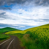 Curvy Roads Through The Canola Fields - The Palouse Region, Washington