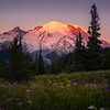 Mt Rainier Framed At Sunrise Meadow - Mount Rainier National Park, WA