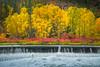 Colors Everywhere Above The Damm - Leavenworth, Central Washington, WA
