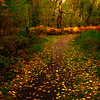 Walking The Path Through The Seasons - Methow Valley, Washington State