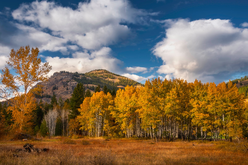 A Stand Of Aspens Below The Peaks - Methow Valley, Washington State