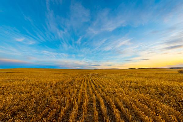 Open Fields During Harvest Season In Palouse _The Palouse_Eastern Washington