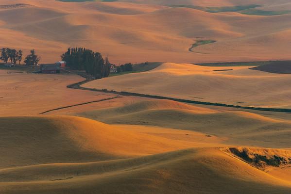 Mounds Of Golden Colors - Steptoe Butte State Park, Palouse, Eastern Washington