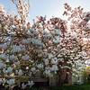 Gardens Of White - Vashon Island ,WA