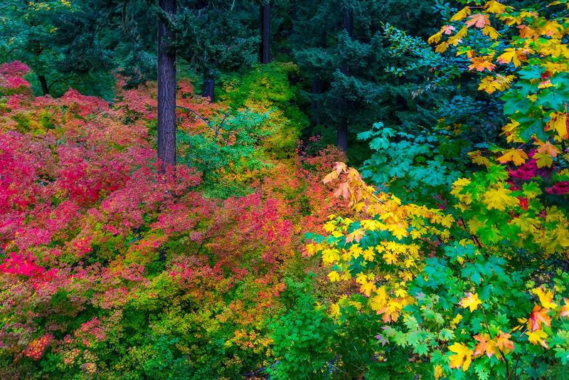 Collage Of Color_Road Up to Rainier -Mount Rainier National Park, Washington