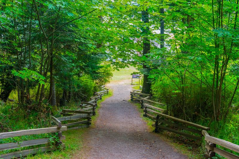 Trail Down To English Camp Trail, Friday Harbor, San Juan Islands, WA