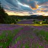 Looking Down On The Farm - Pelindaba Lavender Farm, San Juan Islands, WA