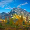 A Grove Of Larches And Mt Stuart - Mt Stuart, Lake Ingalls, Alpine Lakes Wilderness, WA