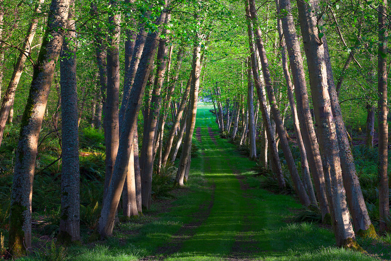 A Path To The Ocean - Vashon Island ,WA
