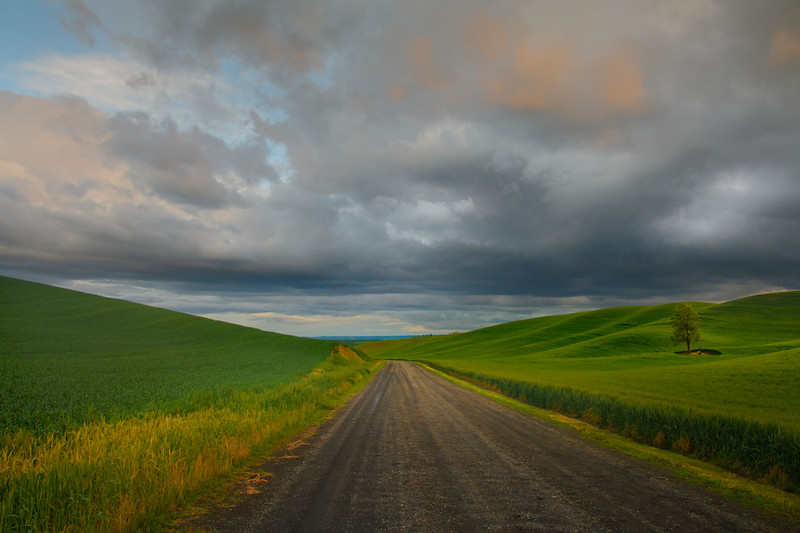 Road Leading Through Back Road Hills - The Palouse Region, Washington
