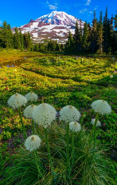 Bear Grass Field - Spray Park,  Mount Rainier National Park, Washington