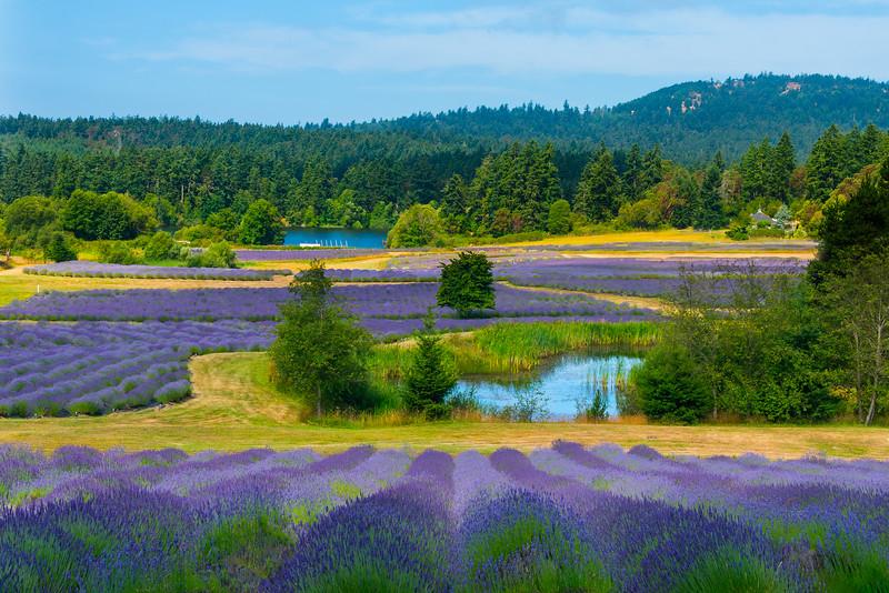 Gardens Of Delight- Pelindaba Lavender Farm, San Juan Islands, WA