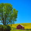 The Red Barn And Glowing Tree -The Palouse, Eastern Washington And Western Idaho
