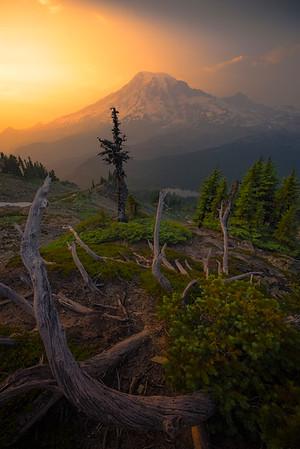 Mt Rainier And Last Side Light Of Evening - Mount Rainier National Park, WA
