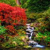 Fall Colors In Kubota Gardens, Seattle, WA