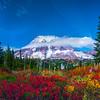 Mt Rainier Framed In Fall Color - Paradise Side, Mt Rainier National Park, WA