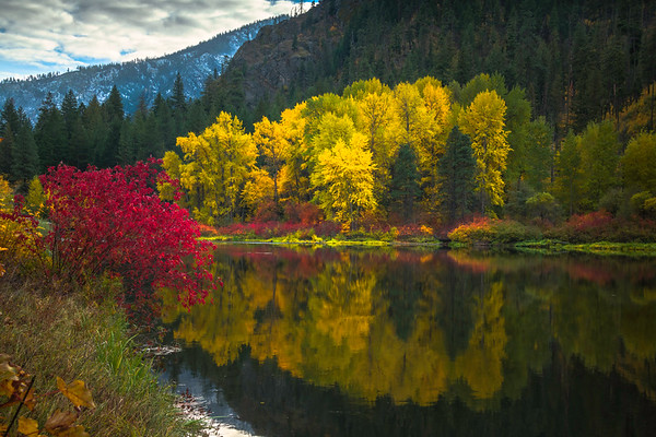Golden Colors Of Autumn Reflected - Leavenworth, Central Washington, WA