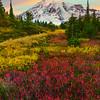 Staircase Of Color Paradise Mt Rainier