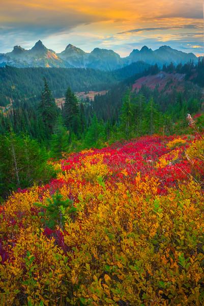 Fall Color Looking Across At Tatoosh Range - Paradise Side, Mt Rainier National Park, WA