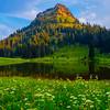 Wildflower Meadows Surround Lower Tipsoo Lake - View Of Tipsoo Lake And Mt Rainier - Lower Tipsoo Lake, Mt Rainier National Park, WA