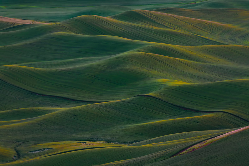 Rolling Palouse Dunes At First Light - The Palouse Region, Washington