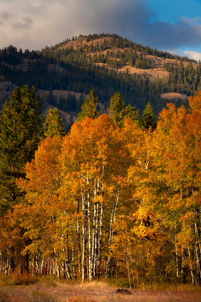 Glowing In Electric Light - Methow Valley, Washington State