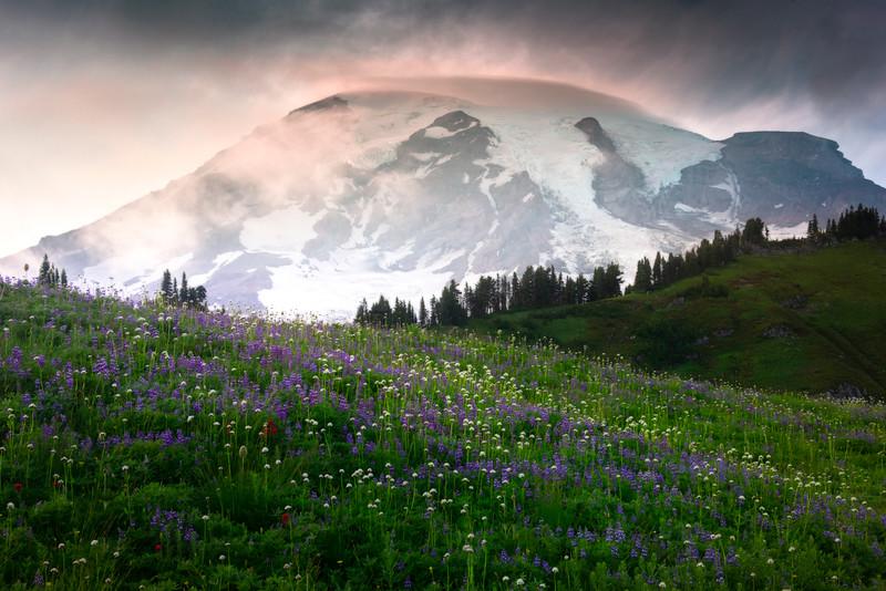 Side Light Near Sunset Showcasing Rainier - Mount Rainier National Park, WA