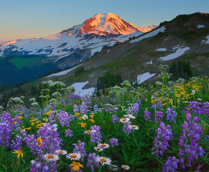 Arrangement Of Wildflowers And Mount Baker - Skyline Divide, Mount Baker, North Cascades National Park, WA