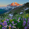 Arrangement Of Wildflowers And Mount Baker - Skyline Divide, Mount Baker, North Cascades National Park, WA