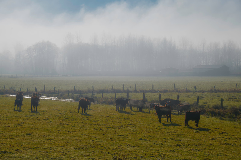 Morning Mist In The Montesano Valley