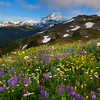 The Endless Valleys Of Color And Flowers - Skyline Divide, Mount Baker, North Cascades National Park, WA