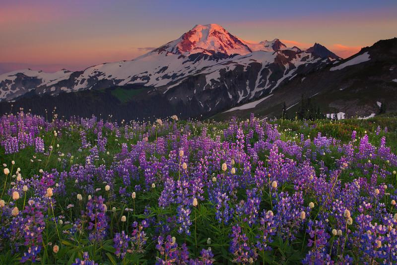 Alpenglow On Mount Baker - Skyline Divide, Mount Baker, North Cascades National Park, WA