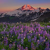 Alpenglow On Mount Baker - Skyline Divide, Mount Baker, North Cascades National Park, WA