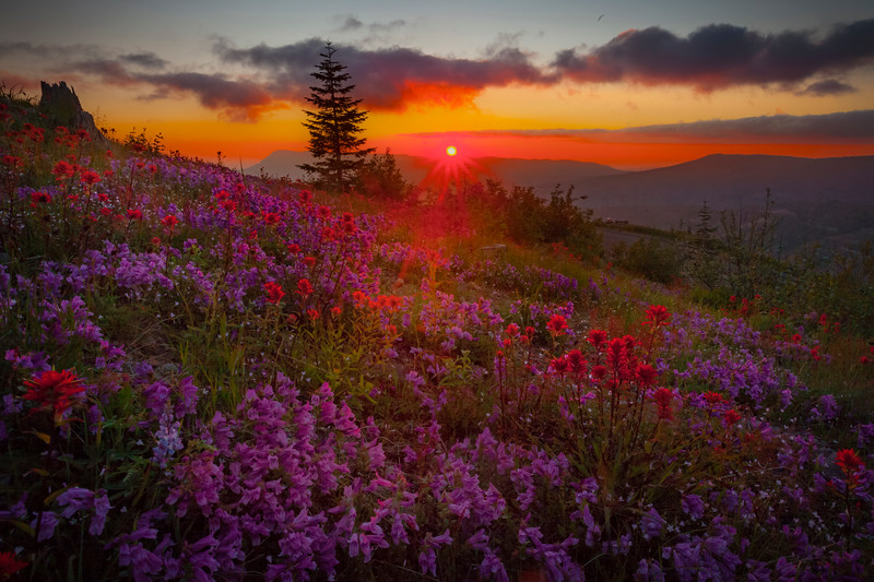Mt St Helens Sunburst Over Wildflowers