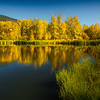 Yellow Pond Reflections In Autumn Glory - Easton Ponds, WA