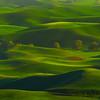 The Line Of Trees - Steptoe Butte State Park, The Palouse, Eastern Washington