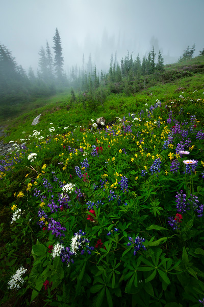 An Arrangement Of Color On The Side Hills - Mount Rainier National Park, WA