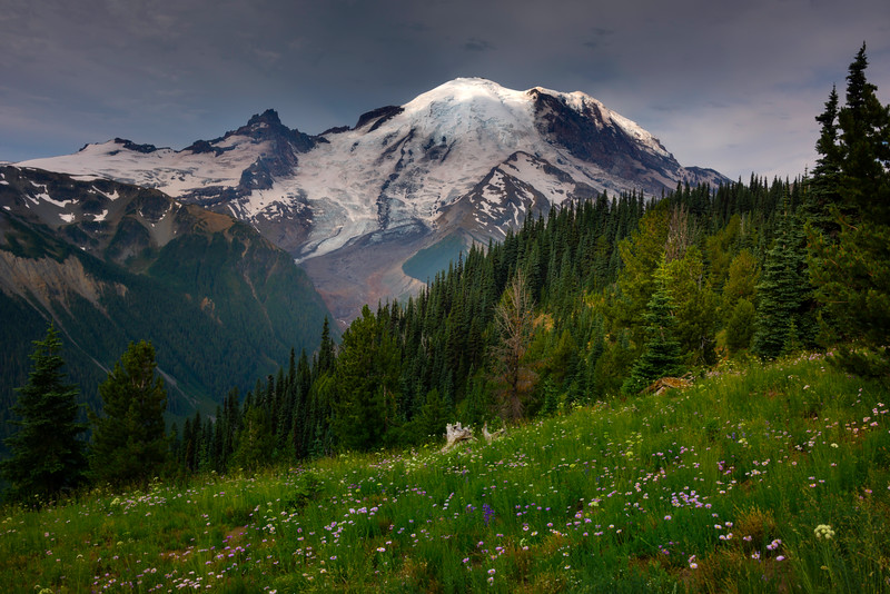 Spotlight On Top Of Rainier From Silver Forest - Mount Rainier National Park, WA