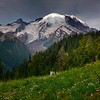 Spotlight On Top Of Rainier From Silver Forest - Mount Rainier National Park, WA