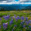 A Sign Of Seasons - Hurricane Ridge, Olympic National Park, WA