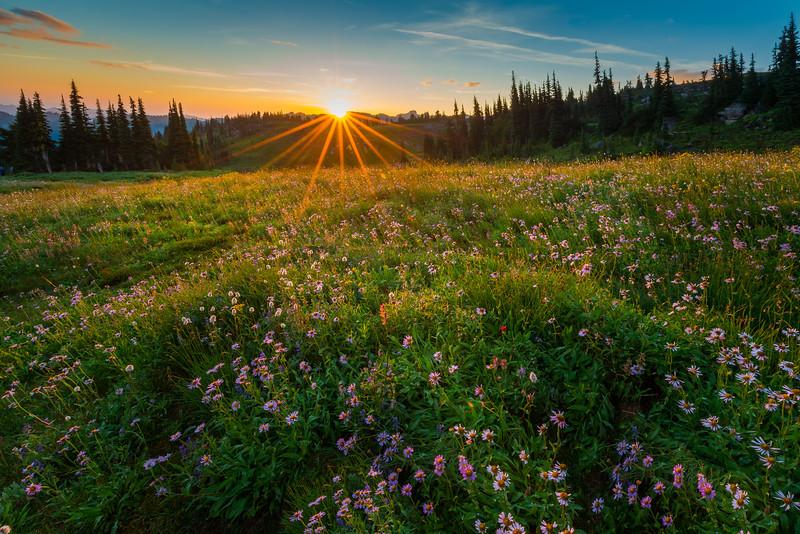 Sunburst Over The Warm Meadows Of Snow Grass Flats _Goat Rocks Wilderness, Gifford Pinchot SP_WA_